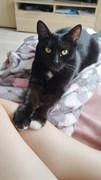 Кошка Шери - Нижняя терасса