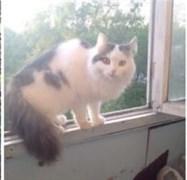 Кошка Соня - Дальнее Засвияжье