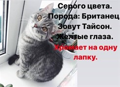 Кот Тайсон - Полбина