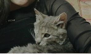Котенок на Мелекесской