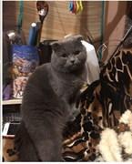 Кот на Варейкиса