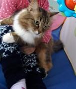 Кошка на Промышленной