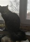 Кошка на Мостовой