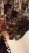 Котенок на Нариманова