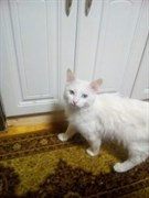 Кот в Ишеевке