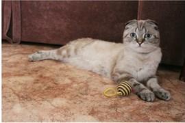 Кот на Гончарова