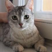 Кошка ШАНЕЛЬ