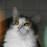 Кошка АТЯ