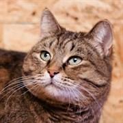 Кошка ЭНДЖИ