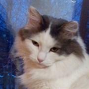 Кошка ДАШЕНЬКА