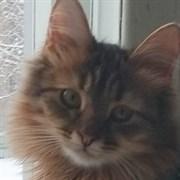 Кошка МУСЕЧКА