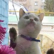 Кошка ЕВА
