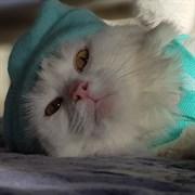 Кошка РУСЕНЬКА