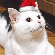 Кошка МАТИСА