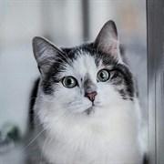 Кошка ЛУЛУШЕЧКА