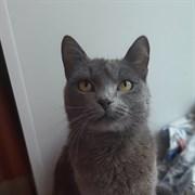 Кошка ЯСЯ