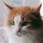 Кот ТВИЧ