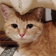 Кошка ШУША