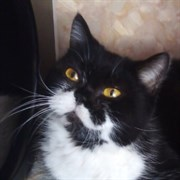 Кошка БУЛОЧКА