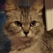 Кошка ДЭЯ