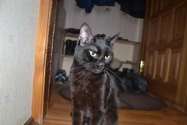 Кошка на Авиастроителей