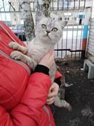Кошка в Чердаклах