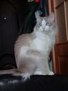 Рыжий кот на верхней