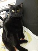 Черный кот на Пархоменко
