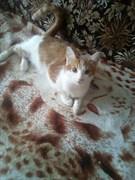 Кошка на Лен ком 5