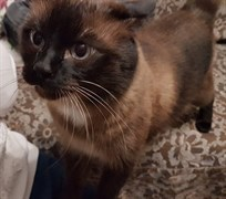 Кот на Ефремова