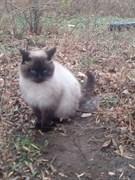 Кот поинтовый на нижней