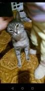 Кошка у памятника Алиеву