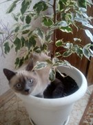 Кошка Жужа на Солнечной