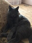 Серый кот на 40 лет Победы