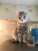 Серый кот на Тельмана