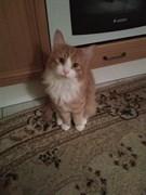 Рыжий кот на Александровской