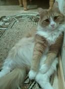 Рыжий кот на Клубной