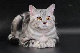 Кошка Василиса на вр. Михайлова