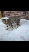 Котенок на Шигаева