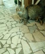 Кот на Пушкарева