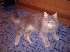 Кошка на Тутях