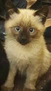 Кот на сп. Ст. Разина