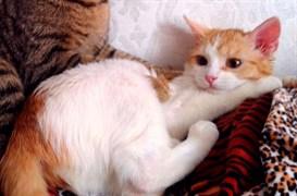 Кошка  Рыжуля на Нижней
