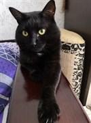 Кот на Луначарского