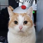 Кошка САННИ