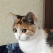 Кошка ЗВЕЗДОЧКА