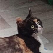 Кошка РИММА