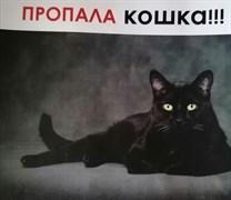 Кошка Сара на Кузоватовской