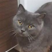 Кошка НЮША