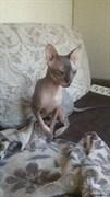 Кот на Лен. Кома 15